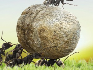 Ants and Climate Change