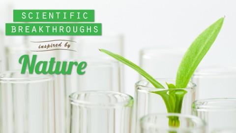 Nature-Science-Header