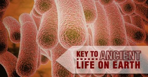 iron-microbe-fb-image