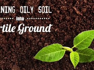 Turning Oily Soil into Fertile Ground